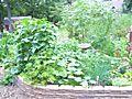 July 27 08 herbs