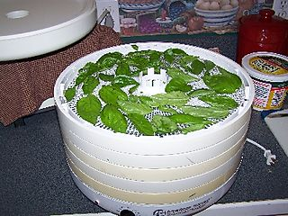 Basil in the dehydrator 10 trays!