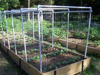 Our Saturday Project A Bean Trellis System in the garden YAY