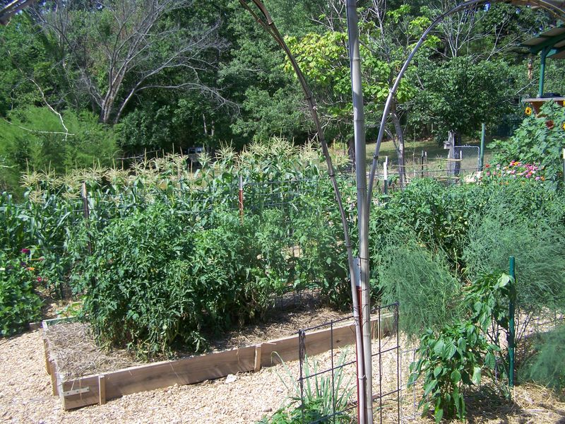 Garden June 26  2012 010