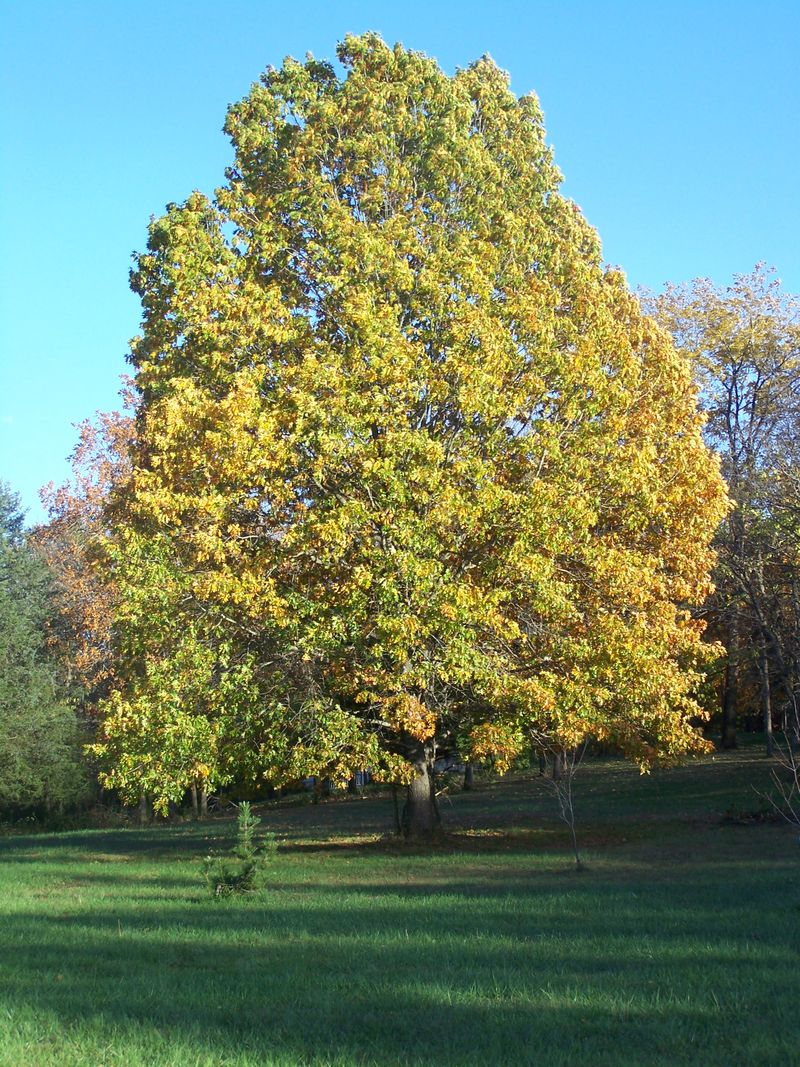 Autumn 2012 003