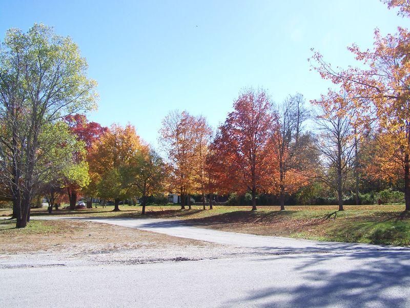 Autumn 2012 014