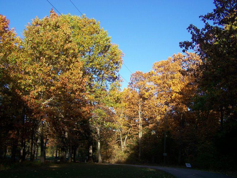Autumn 2012 006