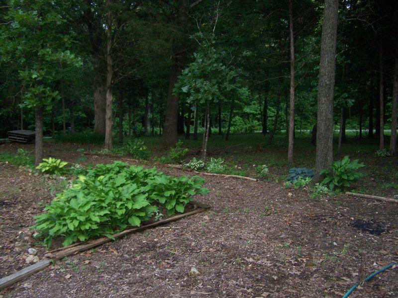 June 18 2013 Garden 010