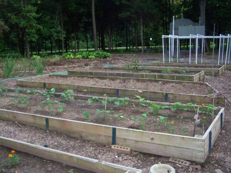 June 18 2013 Garden 007