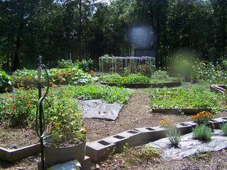 Garden July 19 2013 023