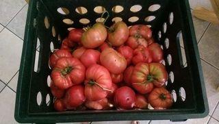 Tomatoes aug2014